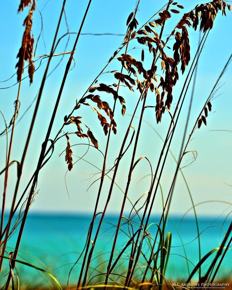 Miami Grass